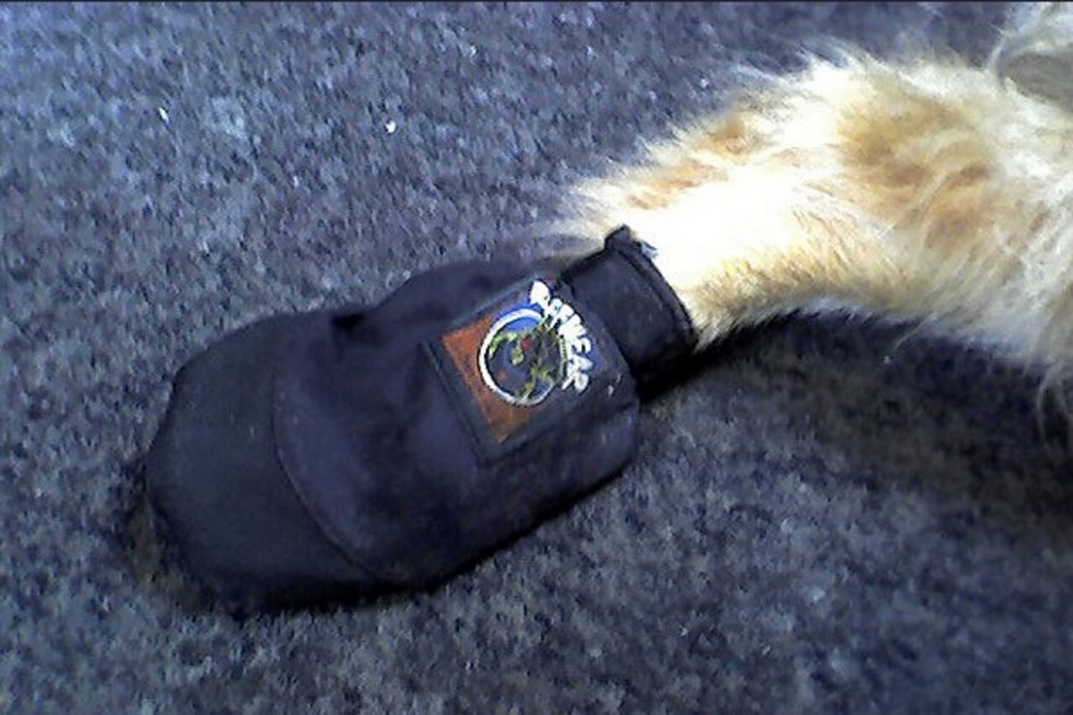 Boots for dog dragging paw