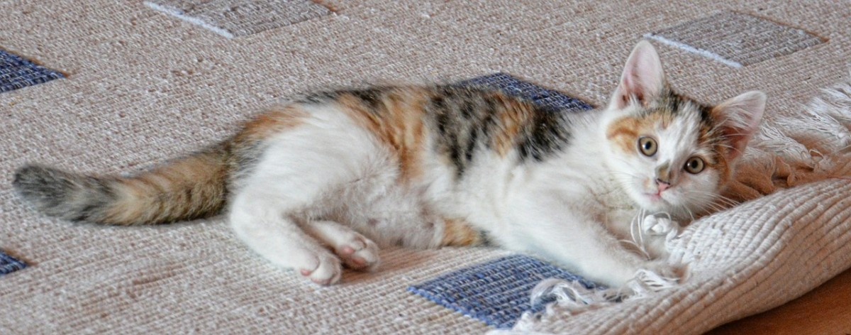 Roll out the welcome mat and make your new cat feel at home!