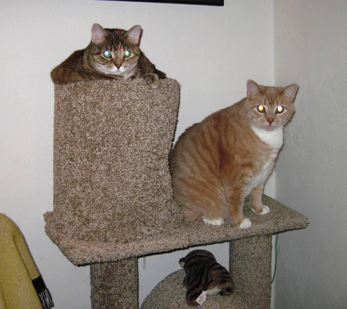 cattower