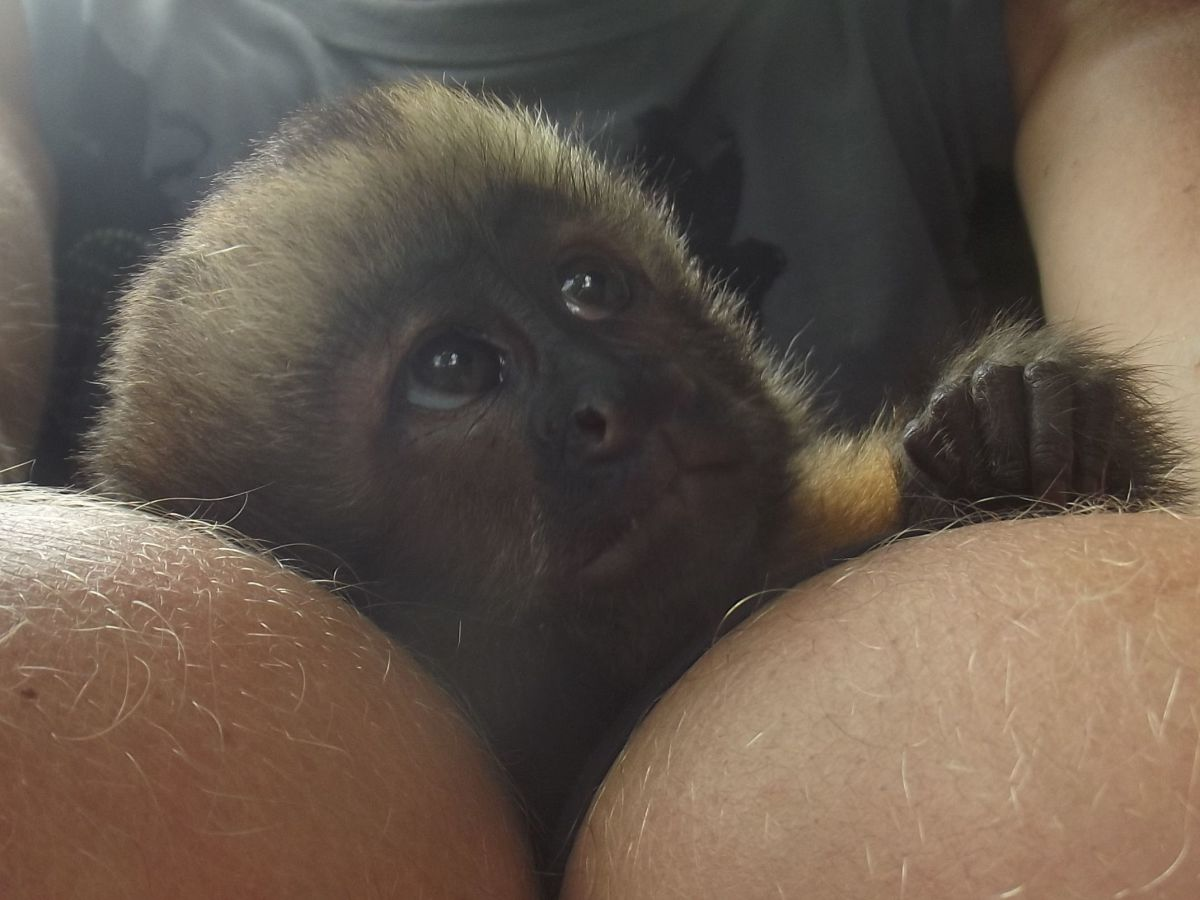 Dont forget that your monkey is looking up to you and expects you to do the right things.