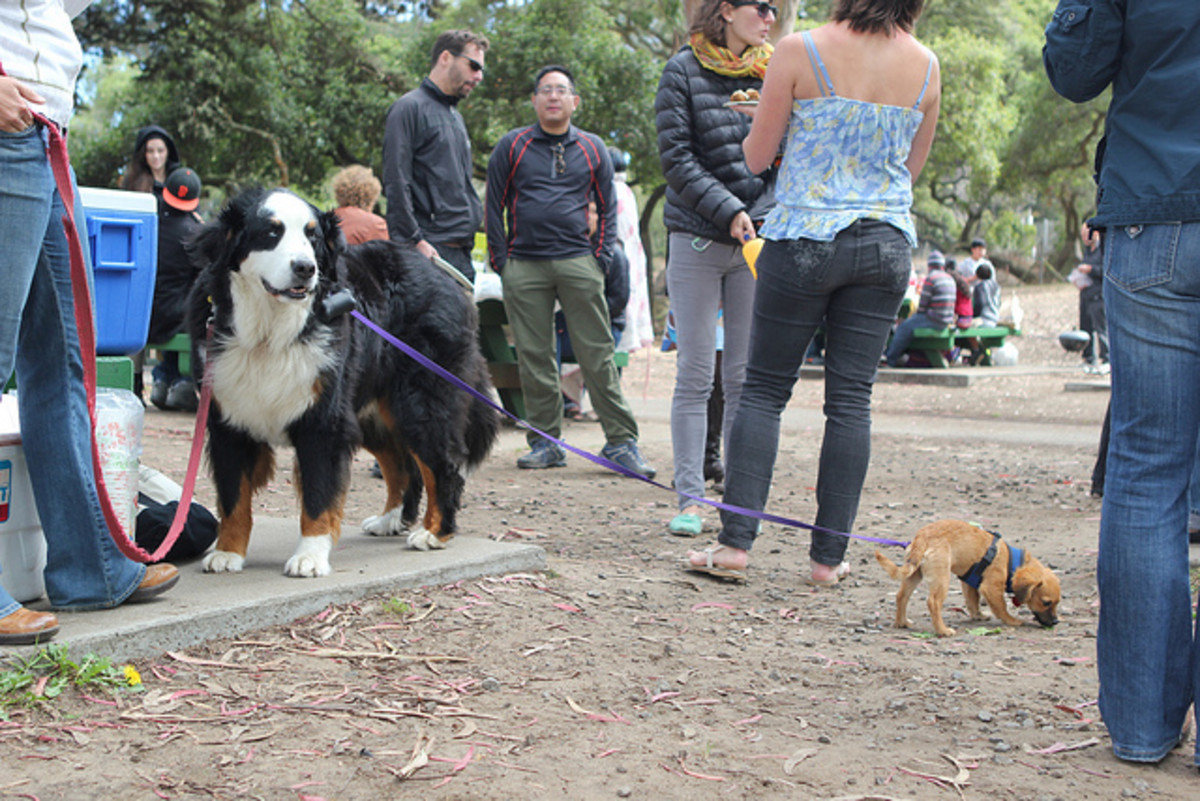 Dog owners walking their dogs.