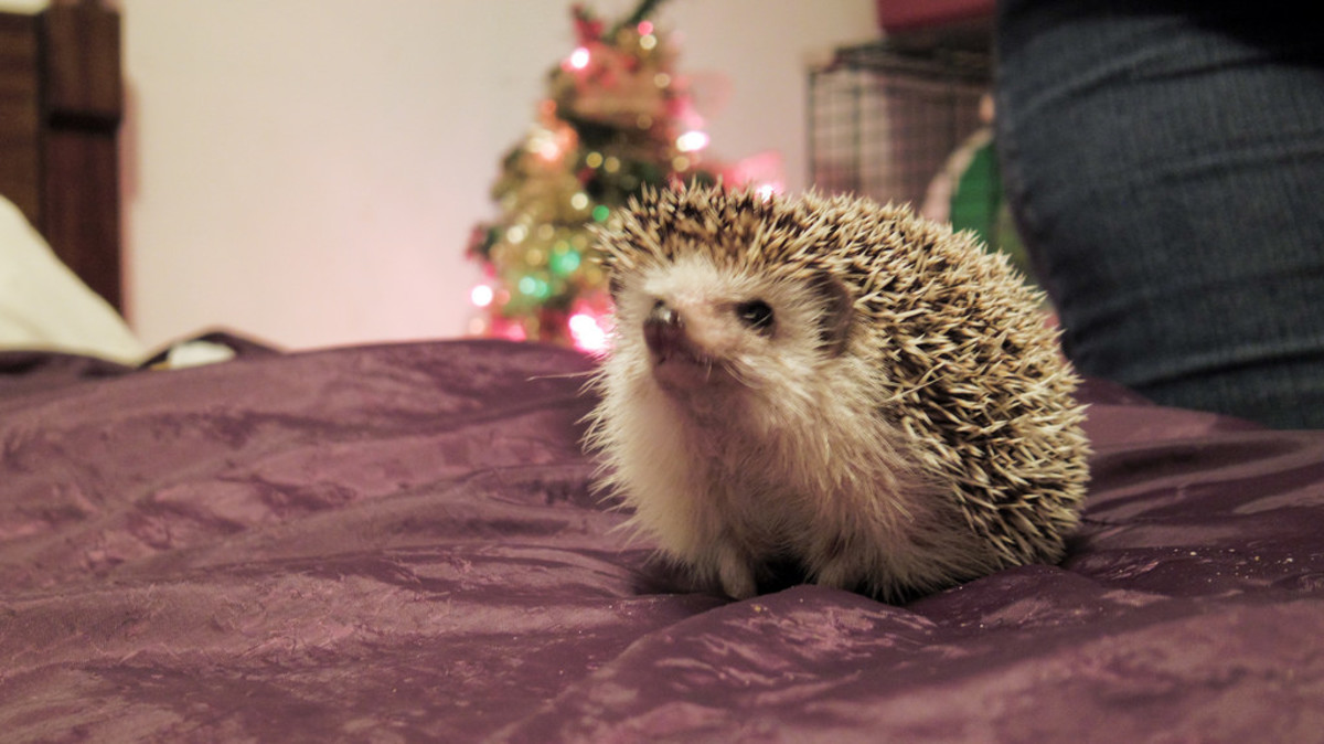 Pets, especially exotic ones, should never be purchased for others as gifts.