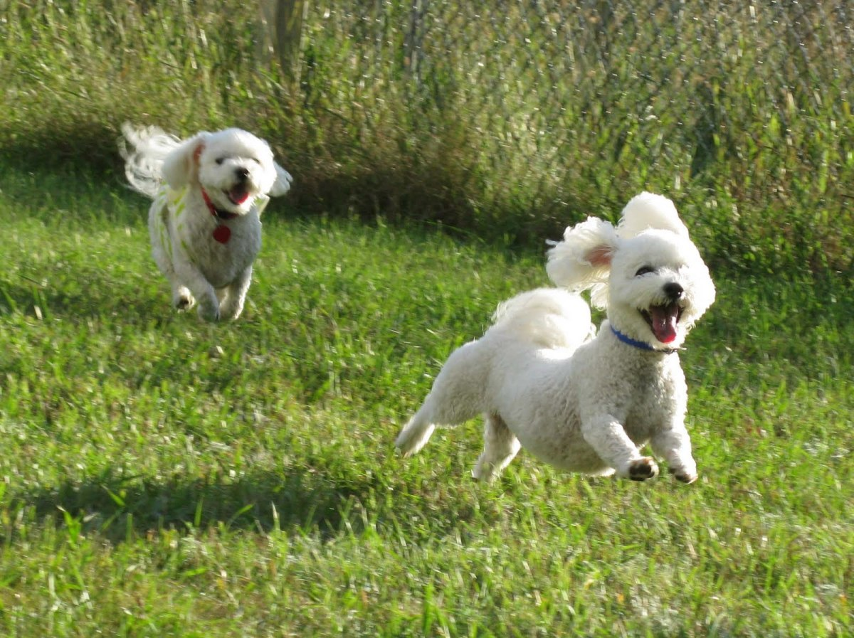 Active dogs are healthy and happy dogs.