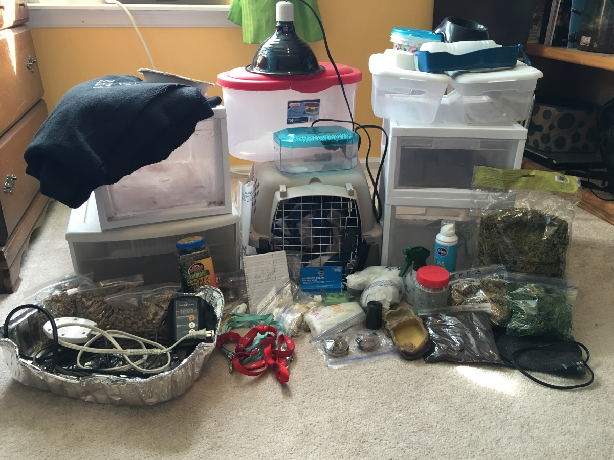 This seemingly-random pile of stuff is the supplies I included in my own pet bug-out kit.