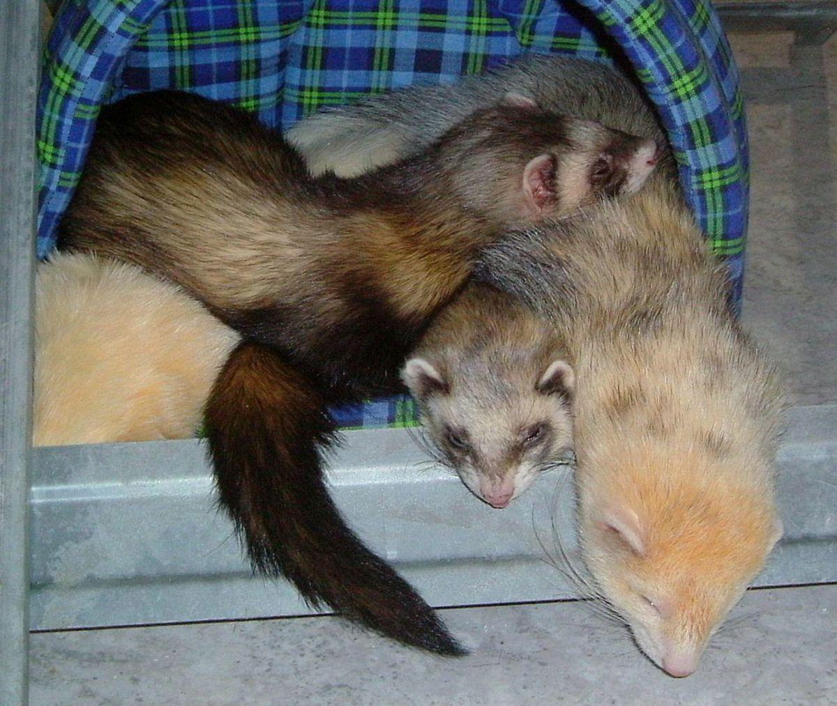 Plan for all pets, including mammals, reptiles, birds, aquatics, and invertebrates.