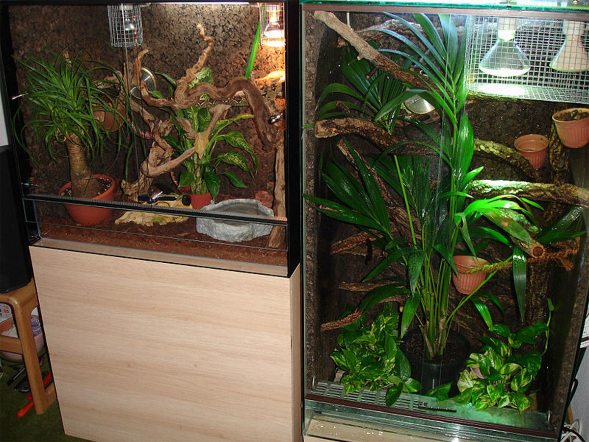 One of the perks of pet reptiles is having a tiny piece of rainforest, desert, or other habitat in your home.