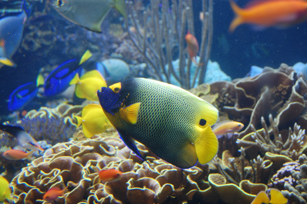 One of the first major decisions for a new tank is whether it will be a freshwater or saltwater tank.