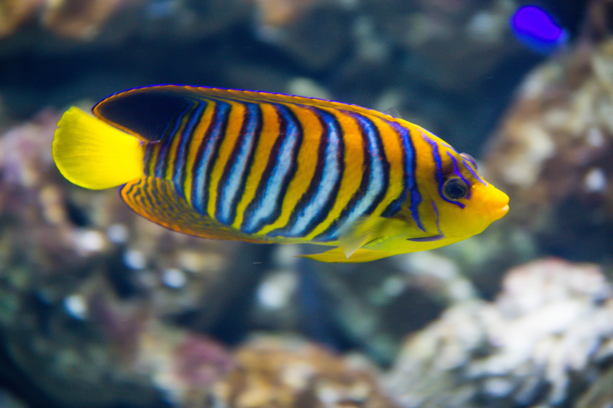 What to Consider Before Buying New Aquarium Fish | PetHelpful