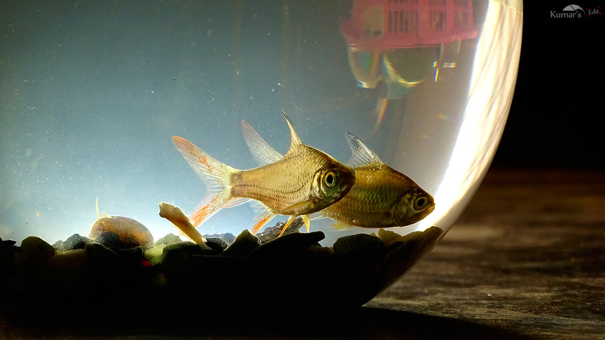 When fish share a tank, you need to make sure you choose species that get along.