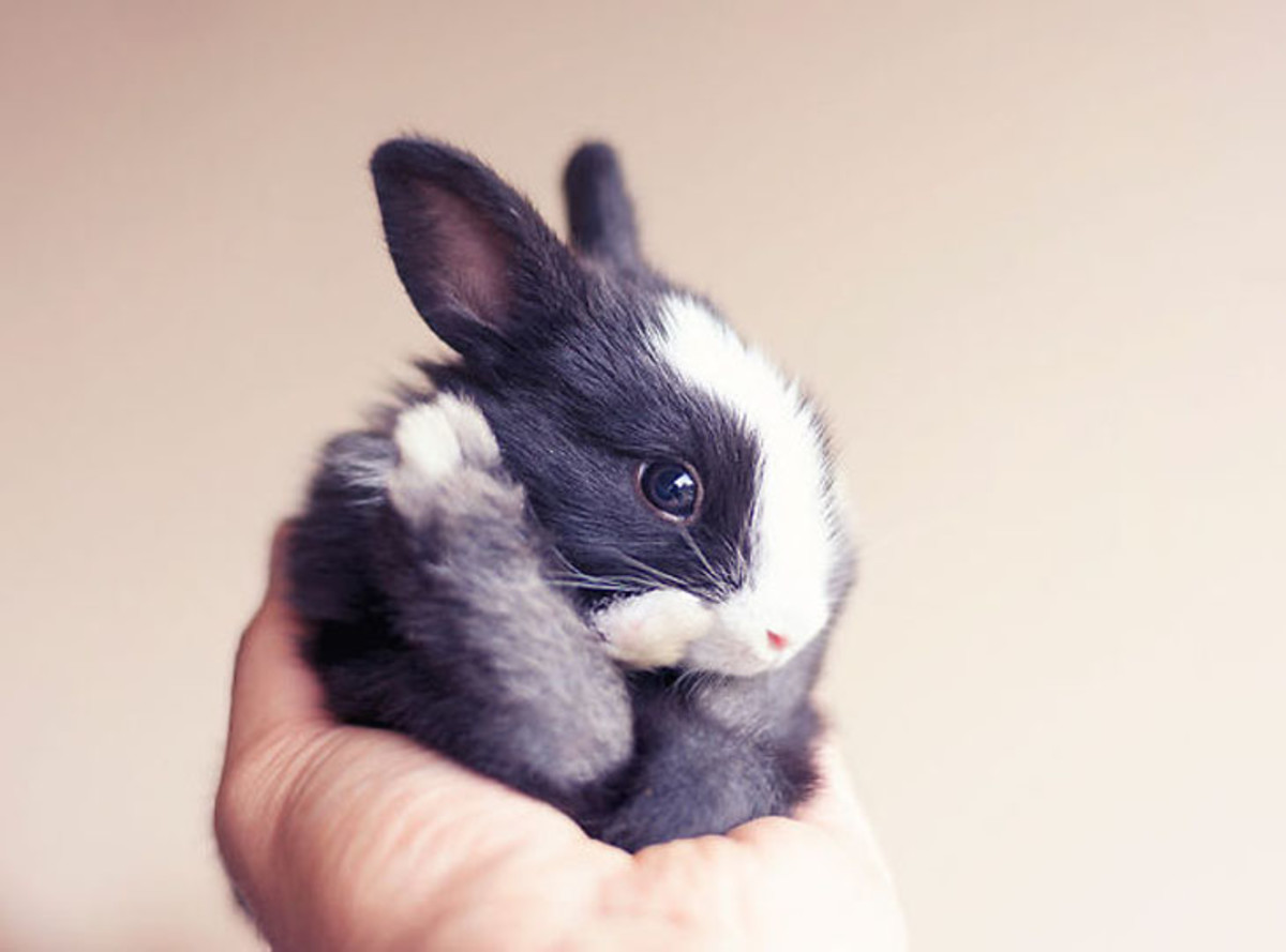 Like most mammals, rabbits are social. Spend time with your pet, especially if it does not have a cage mate.