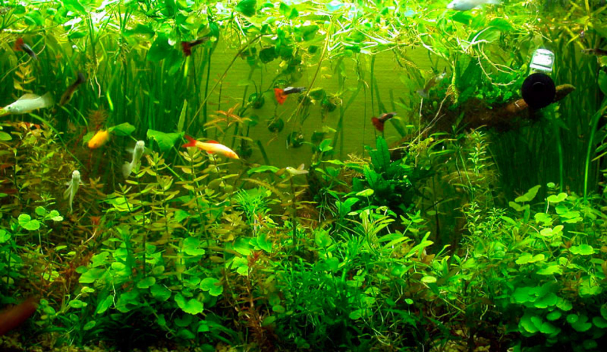 9-common-fishkeeping-mistakes-and-how-to-avoid-them