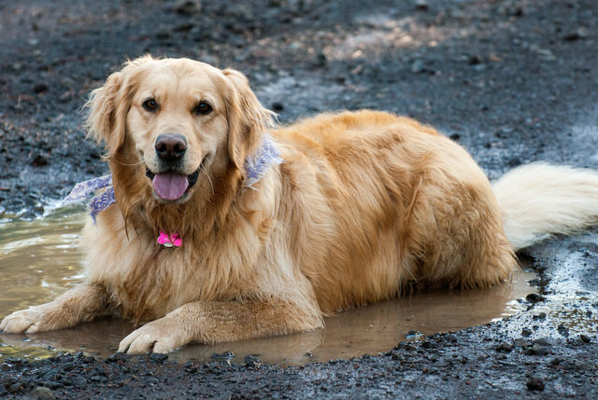 Wet, long-haired dogs will appreciate you learning to control hot spots quickly.