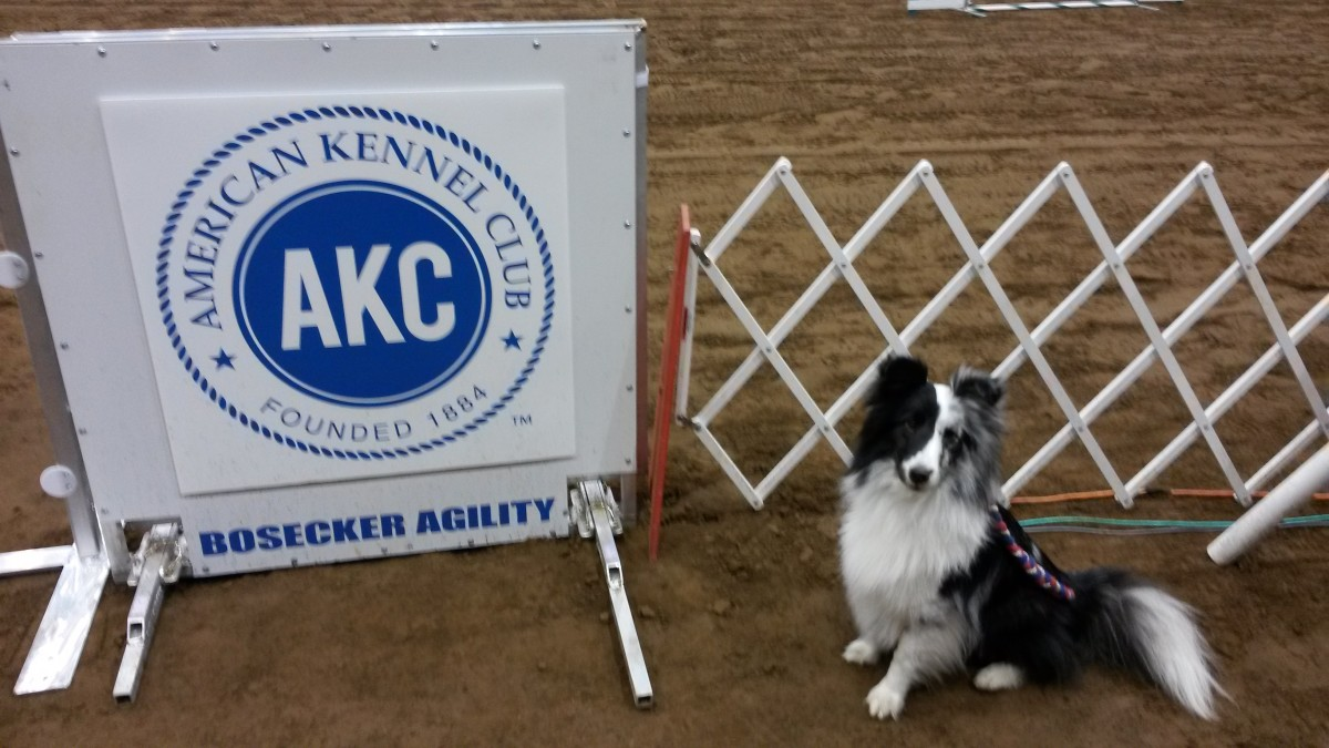 the-unsung-champions-of-the-akc-agility-national-championship