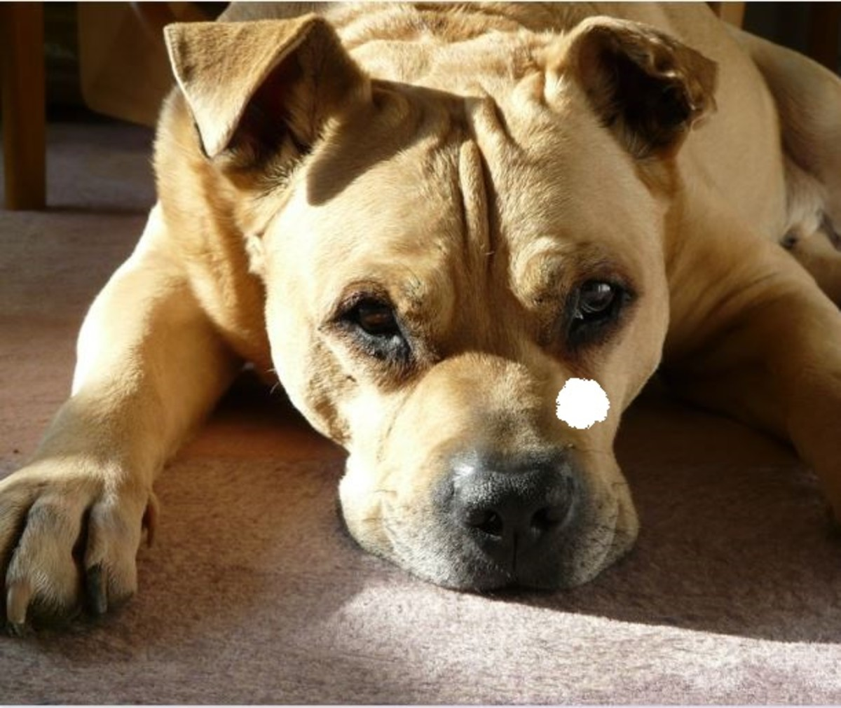 how-to-test-your-dogs-vision
