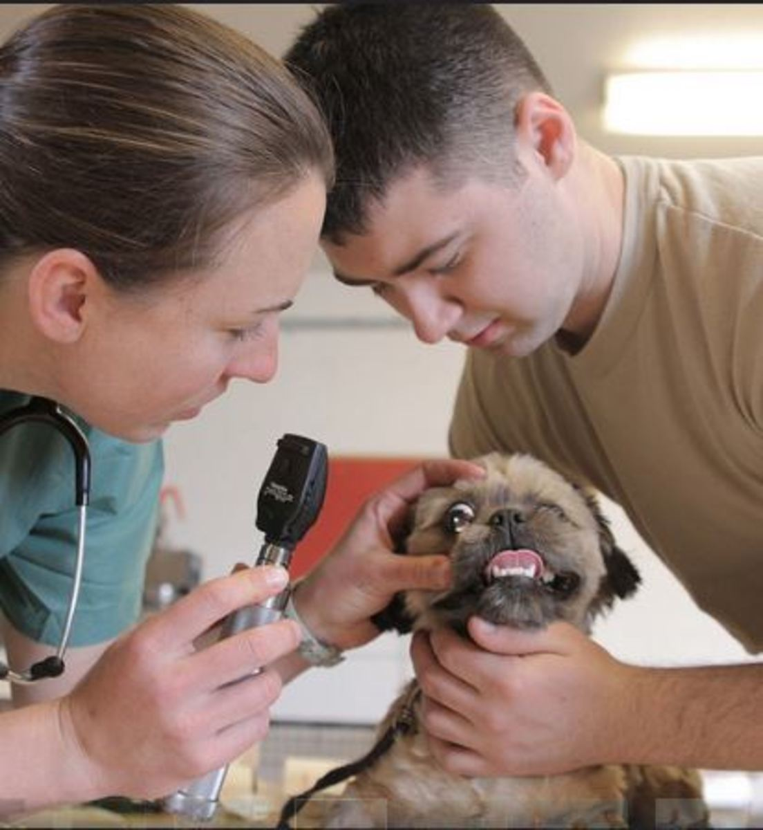 Capt. Brooke Henderson (left), veterinarian, 993rd Medical Detachment, U.S. Army Reserves, performs an eye exam on Wilson, a Maltese mix puppy.
