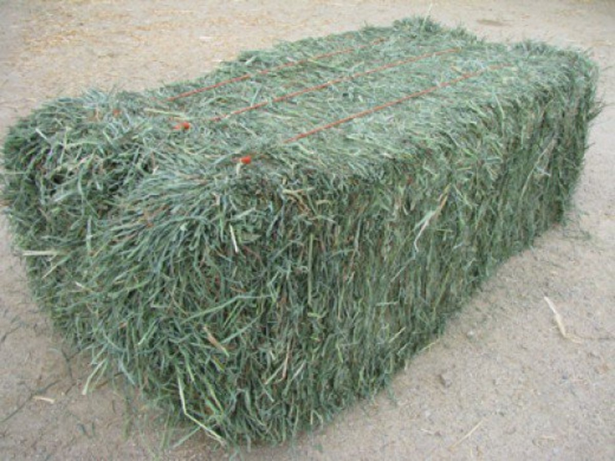 Timothy hay bale