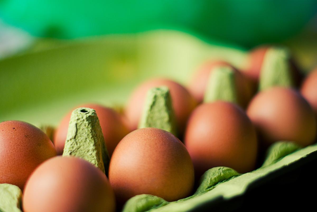 Saving eggs to hatch