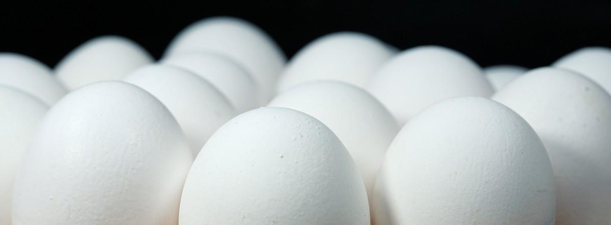 Domestic Duck Eggs
