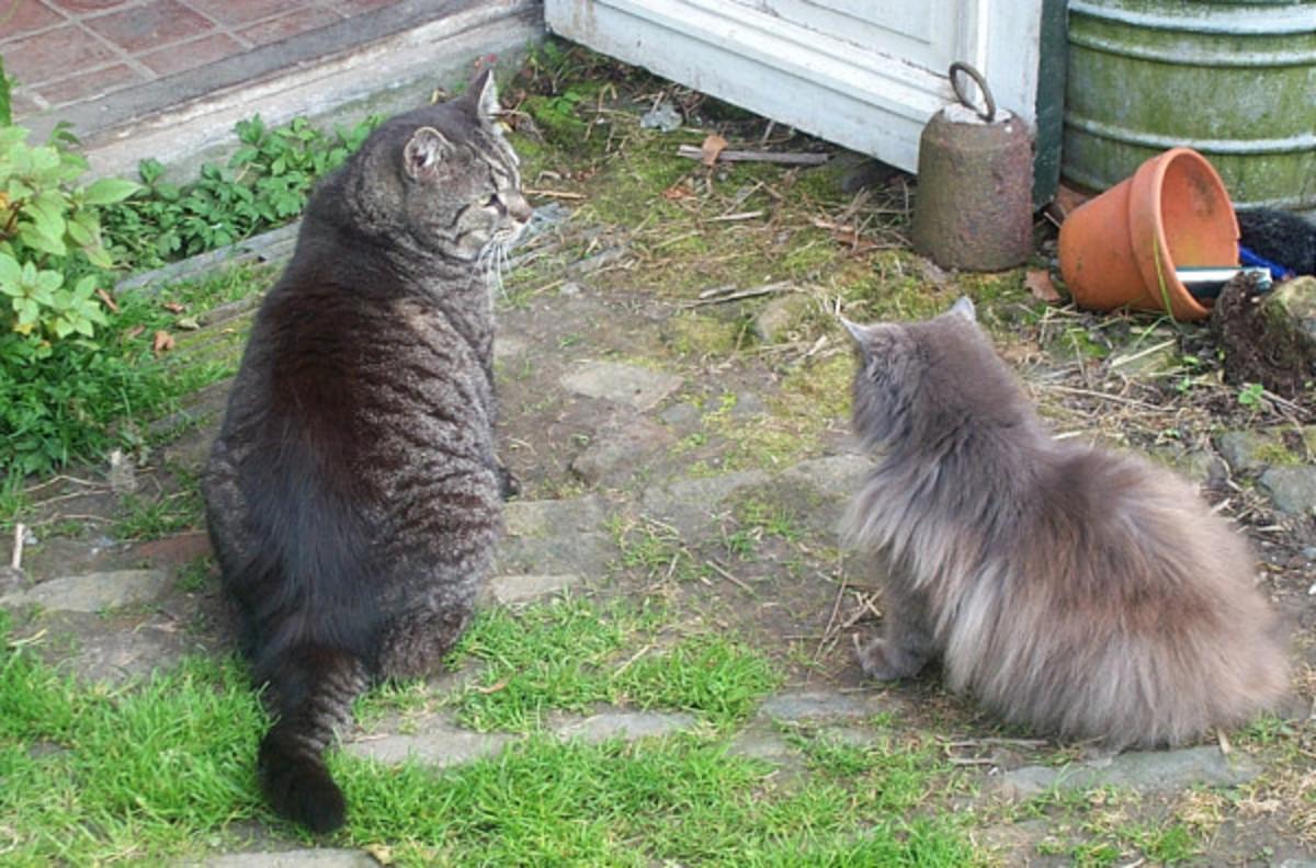 Blind cat Kyra and Bram