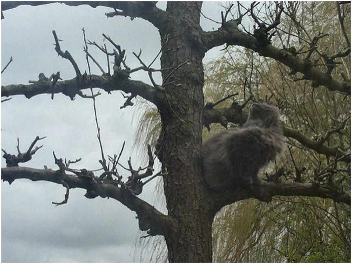 Blind Cat Kyra in tree