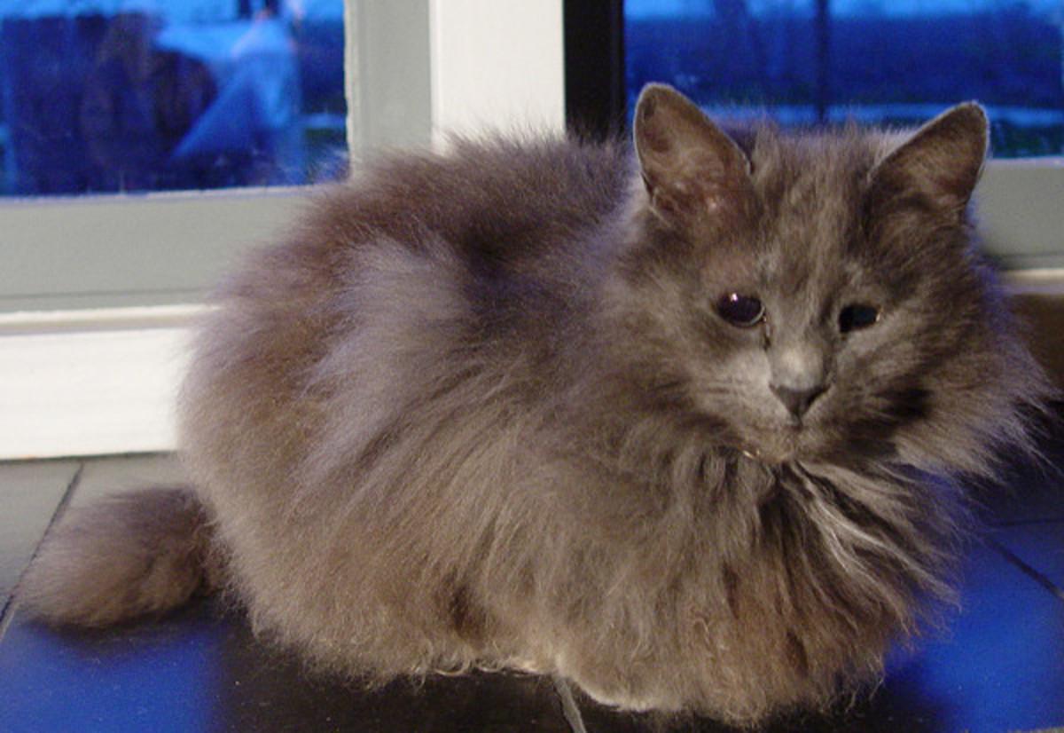 Blind Cat Kyra
