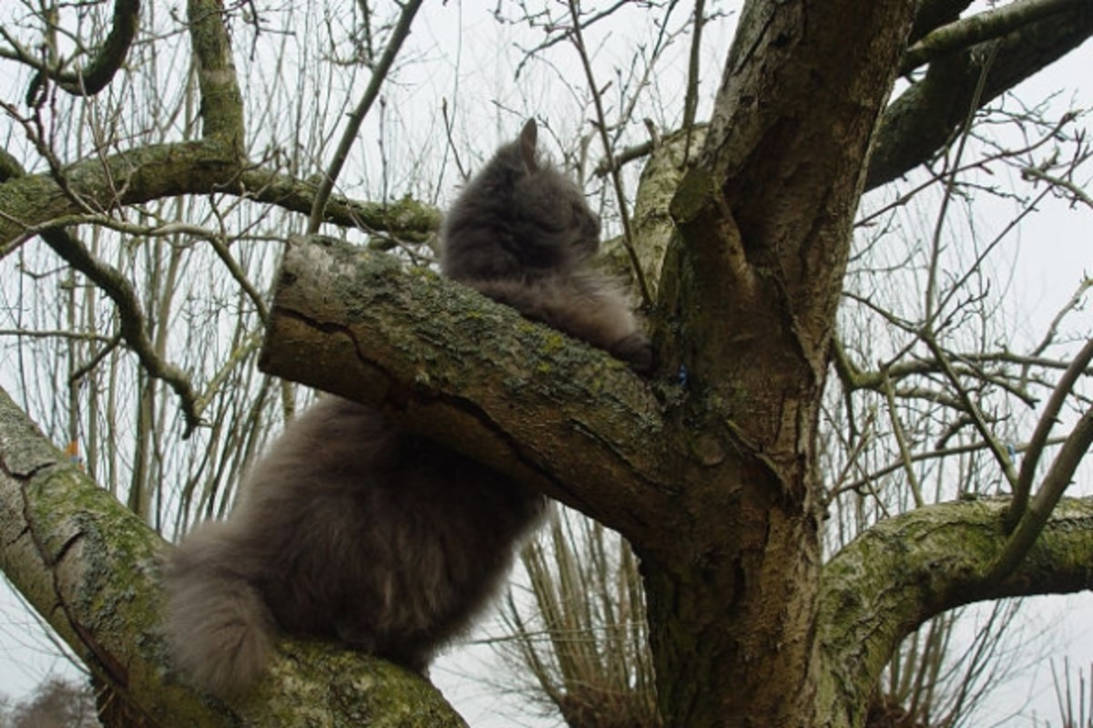Blind cat Kyra in tree