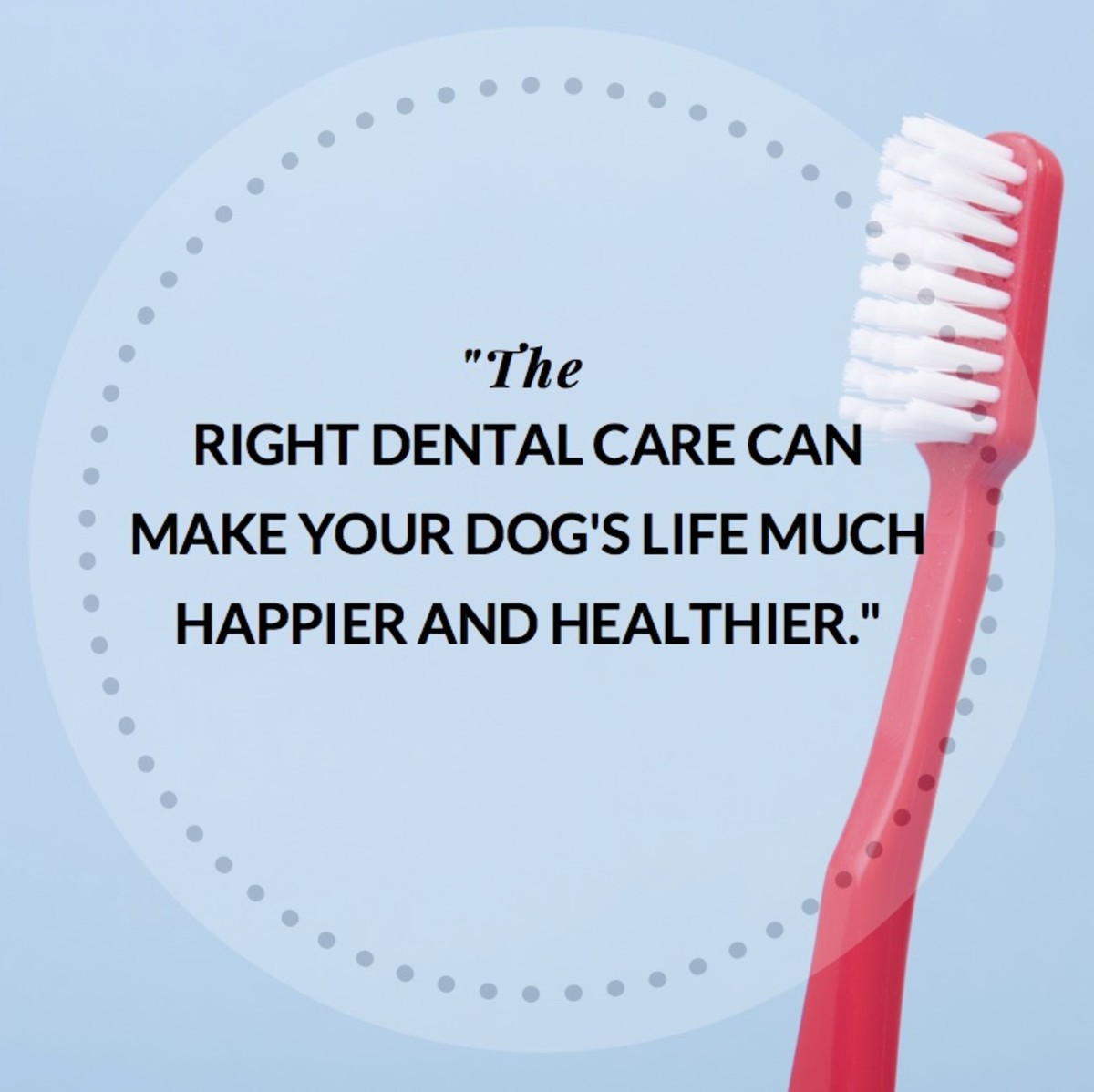 Know which dental issues to look for and how you can intervene early.