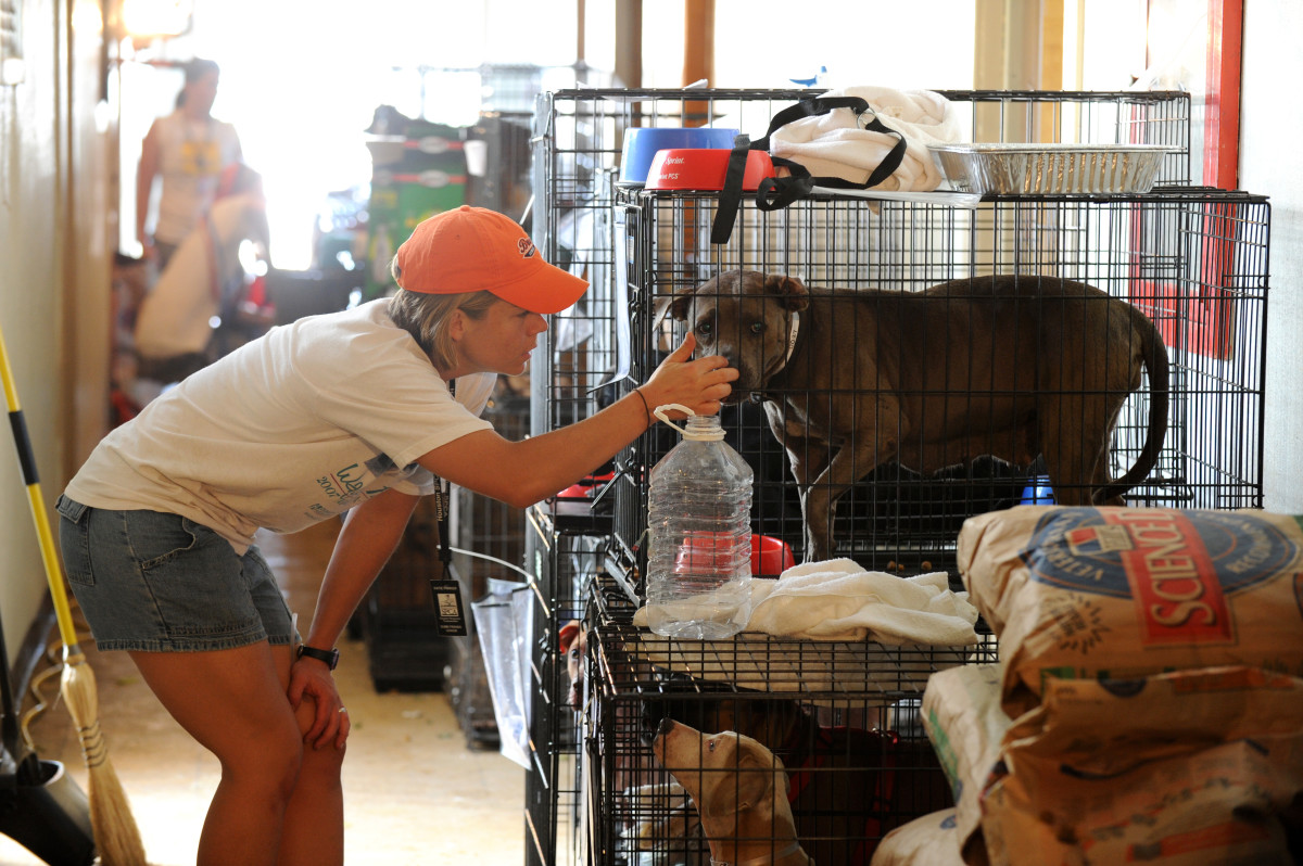 Pets displaced by Hurricane Ike