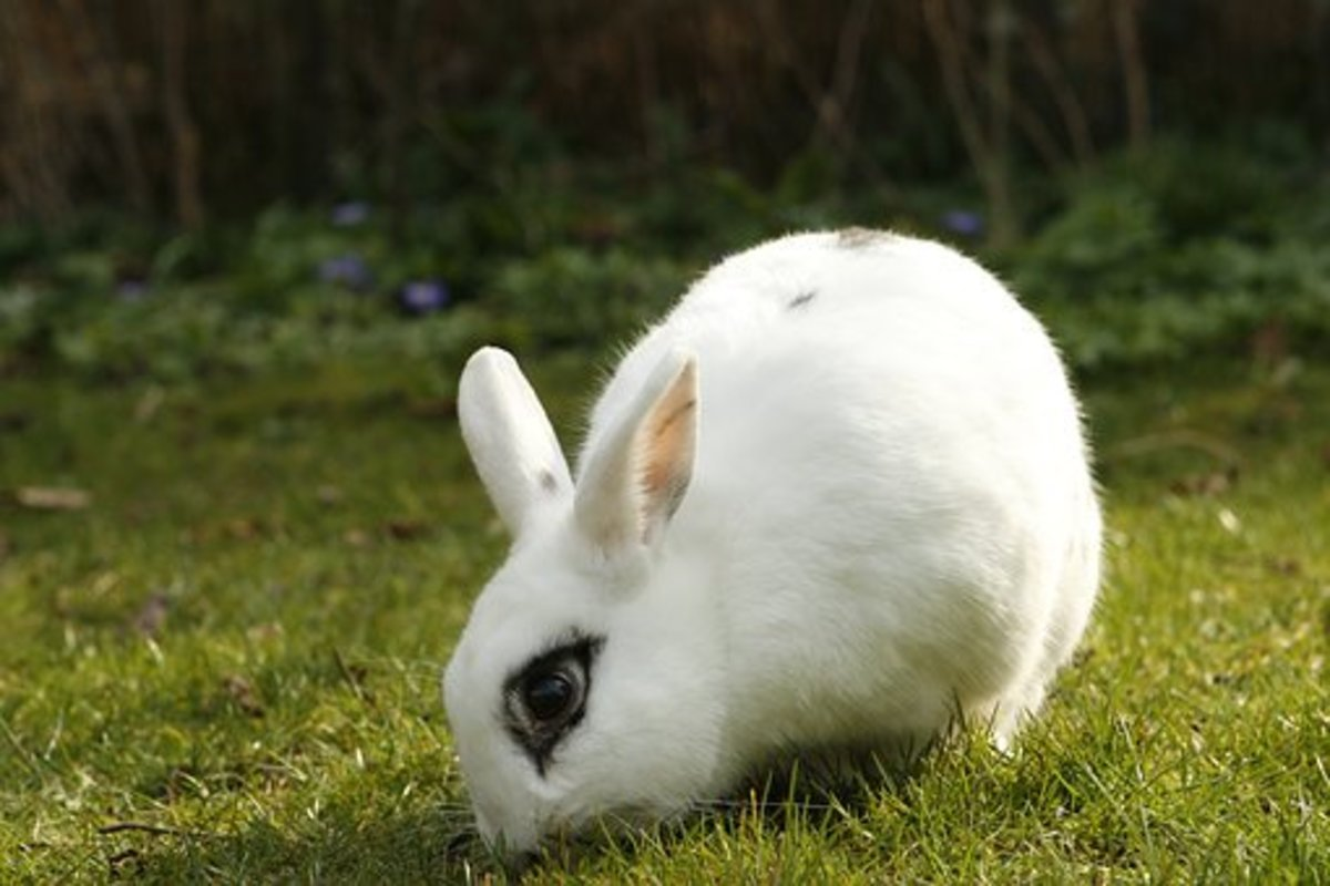 House rabbits have odorless fur.