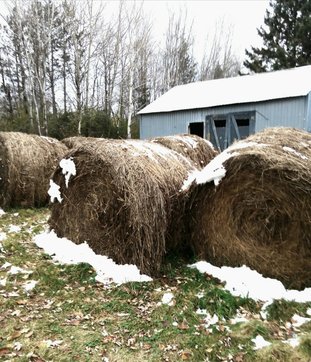 How much hay do you need for the winter? Large round bales pictured here.
