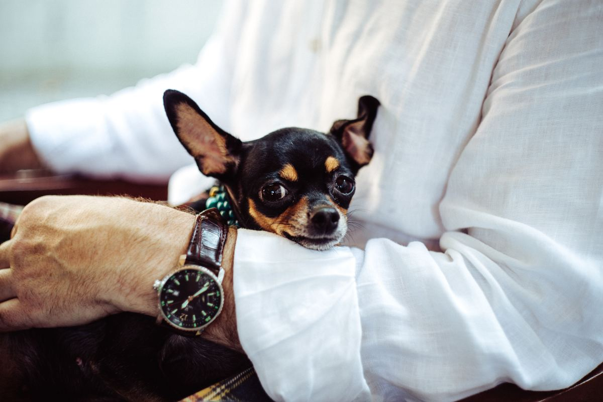 A dog is often accused of being aggressive when he is simply stressed and misunderstood.