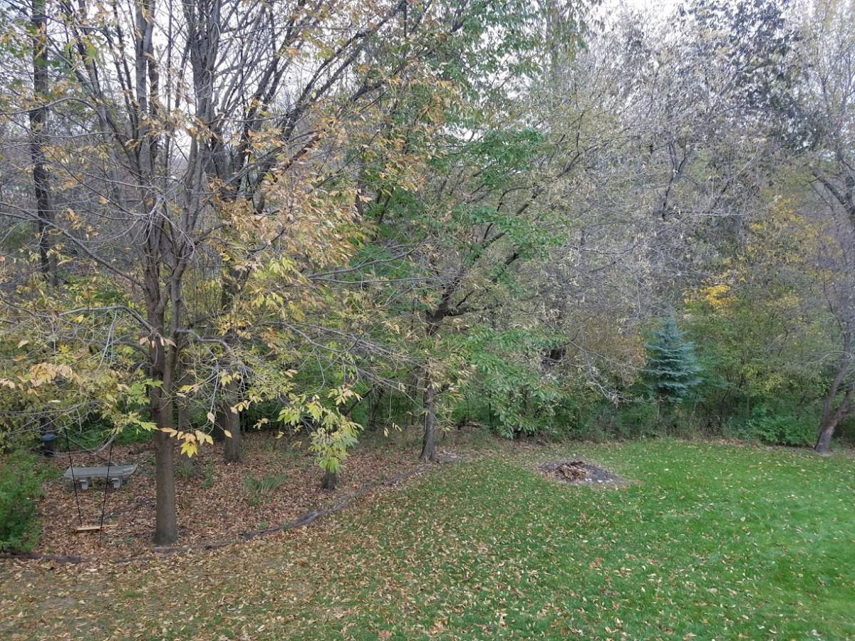 The woods behind our house—Birdie is out there somewhere.