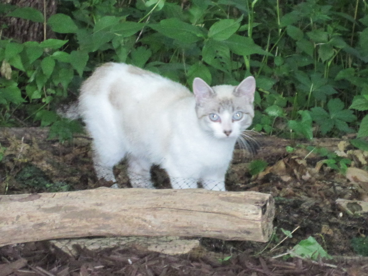 The first photo I ever took of Birdie, when she was a wild cat living in the backyard.