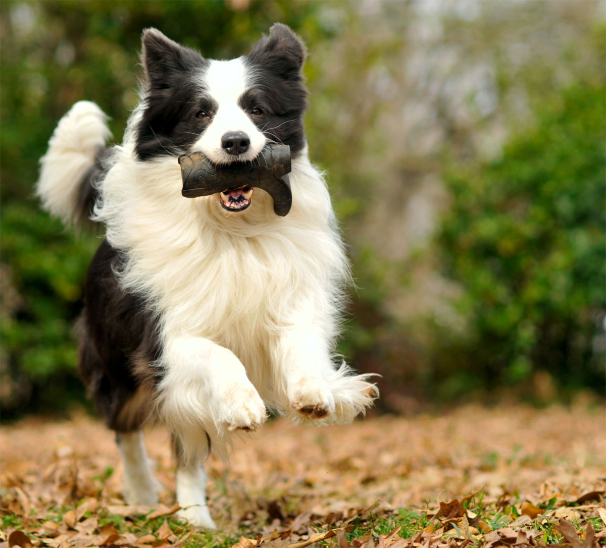 dog-names-for-energetic-dogs