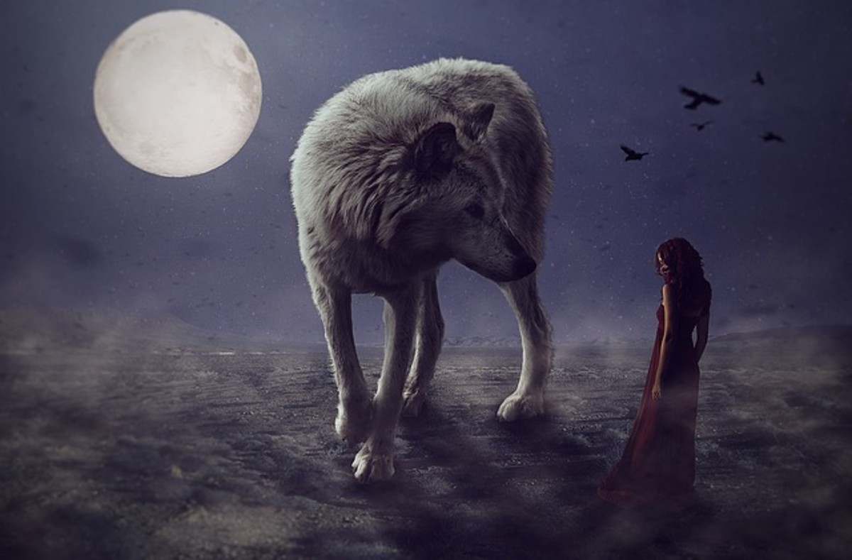 Large wolf and woman in red