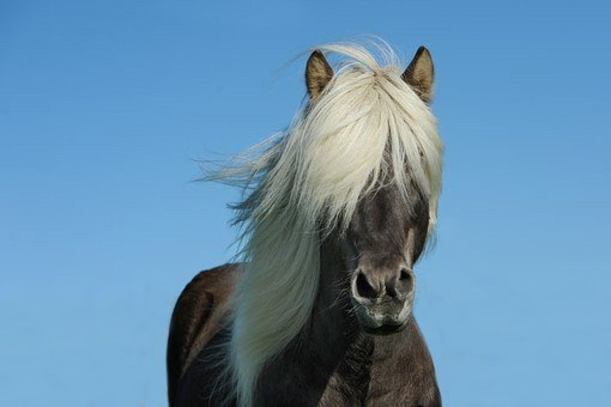 Perhaps this horse would make a good Odin.