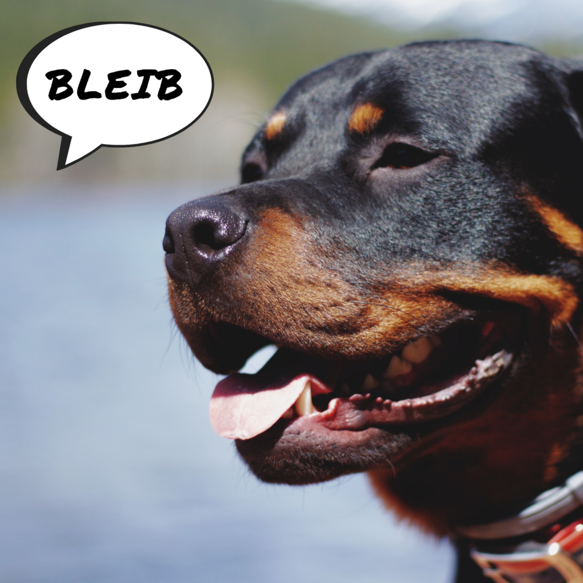 Your dog won't confuse commands for conversation in your primary language.