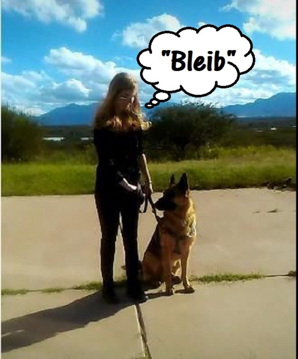 """""""Bleib"""" means """"stay."""""""