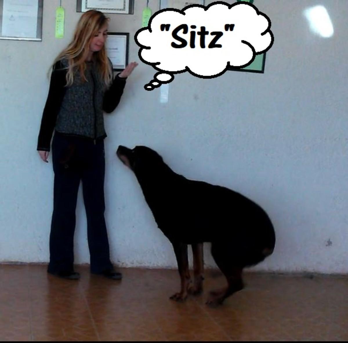 """""""Sitz"""" means """"sit."""""""