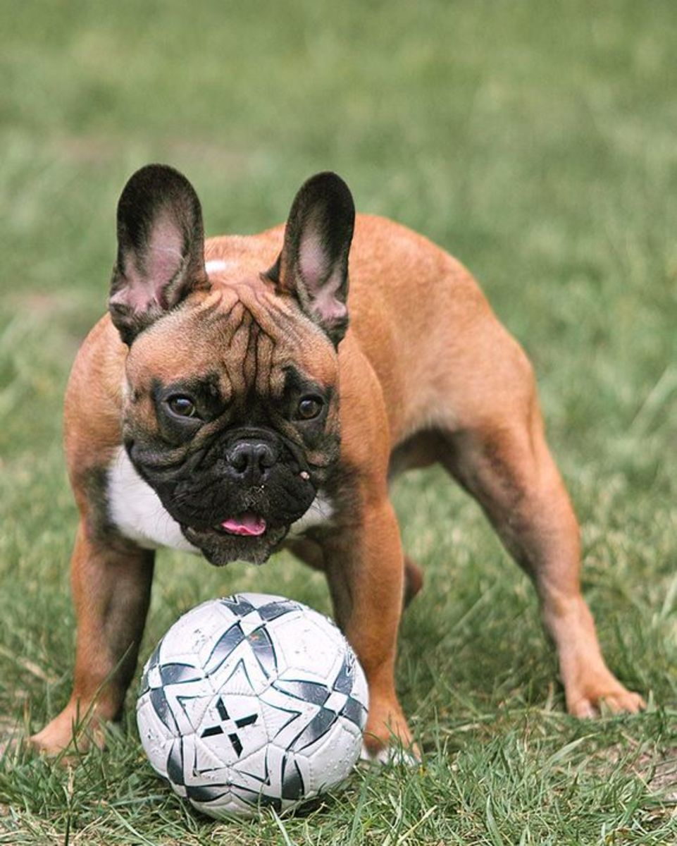 Regular exercise will keep your dog thin.