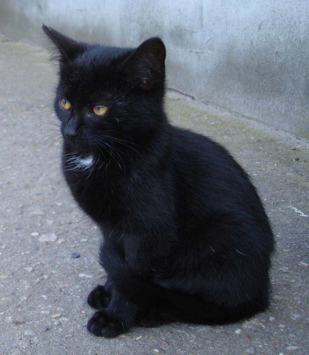 A kitten with a locket pattern.