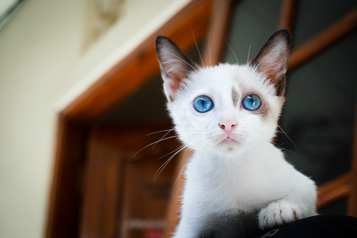 The African name Lulu would be wonderful for this little pearl of a kitten.