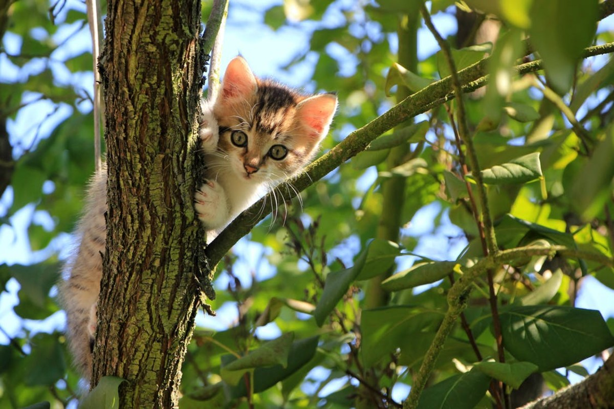 Avoid using dangerous household and lawn products in areas your cat has access to.