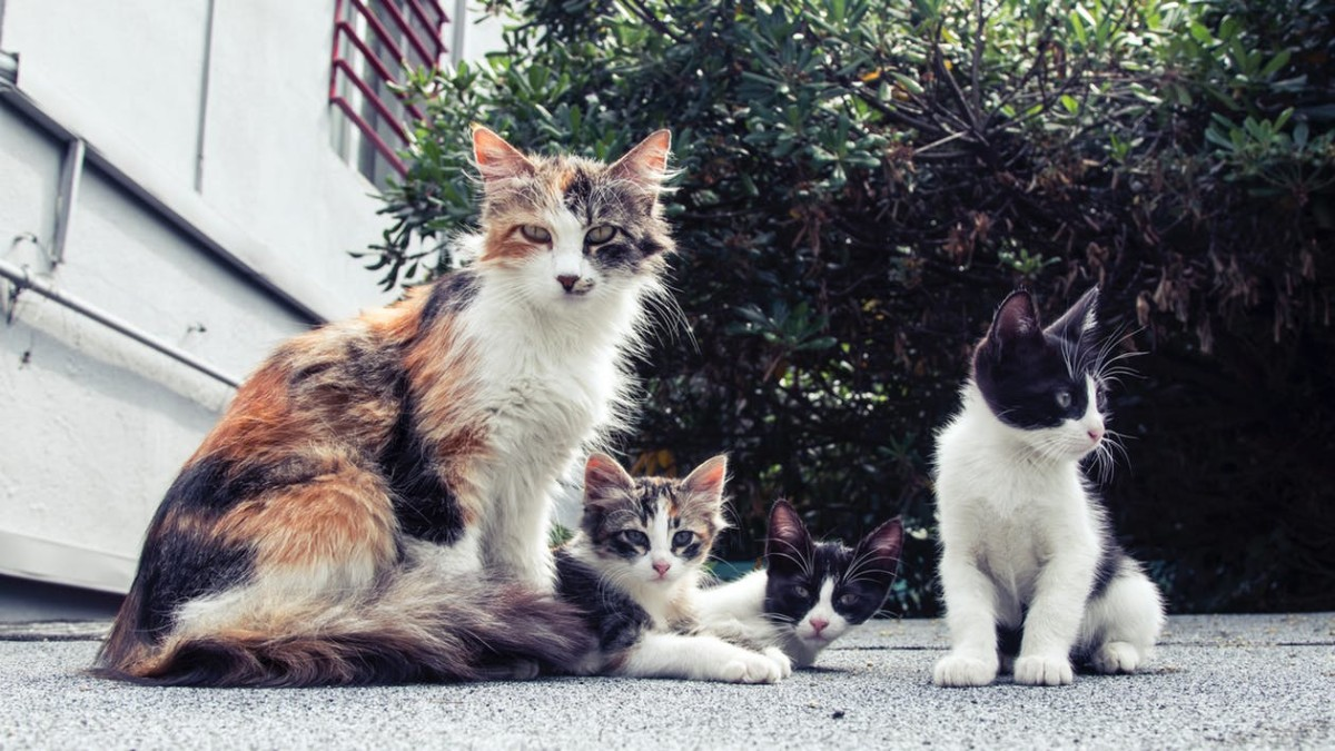 Spaying and neutering your cats not only prevents further contributing to cat overpopulation, but also greatly reduces your cat's risk of developing certain cancers.