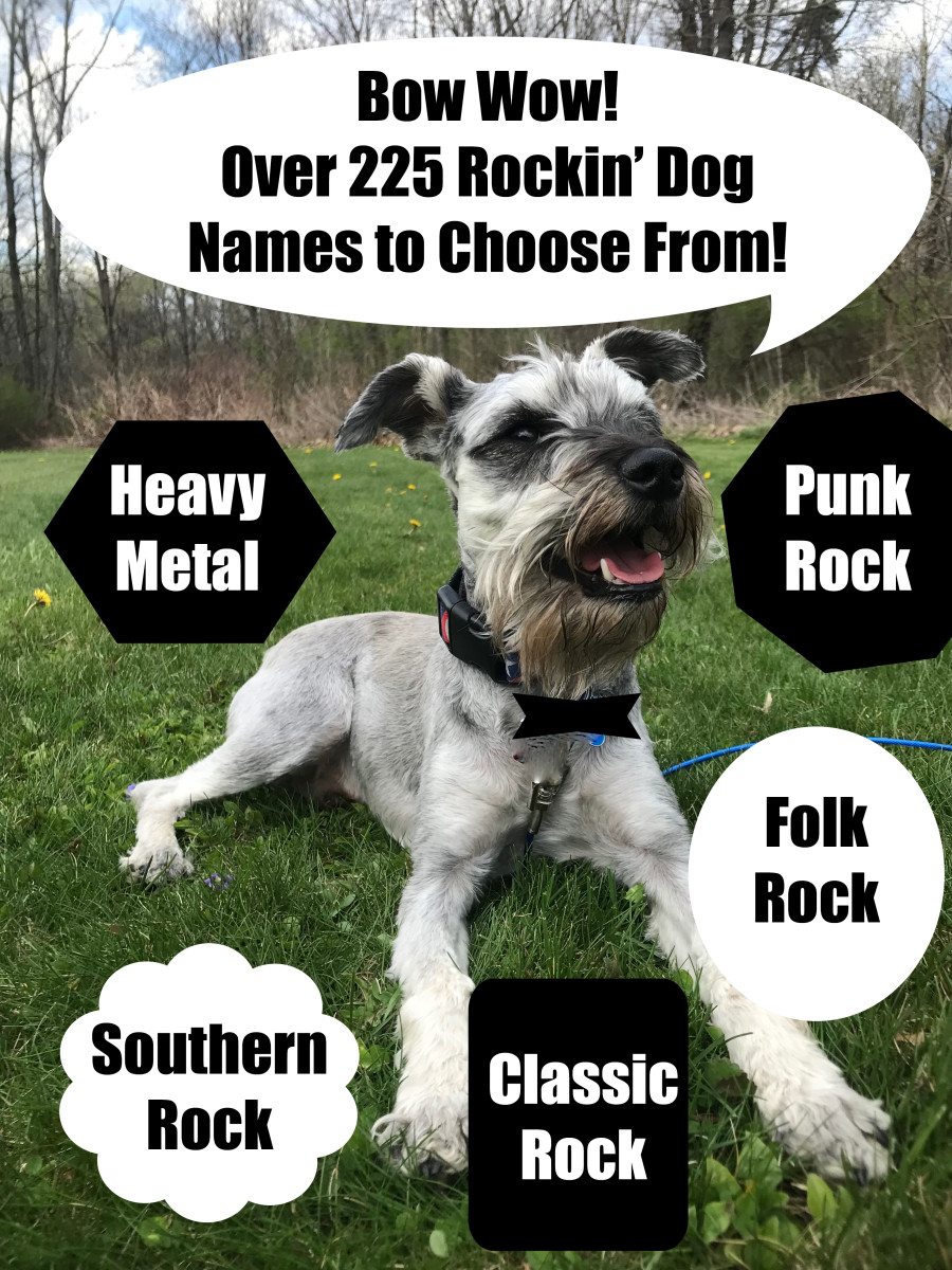 225 Cool And Unique Dog Names Inspired By Rock Music Songs Pethelpful By Fellow Animal Lovers And Experts