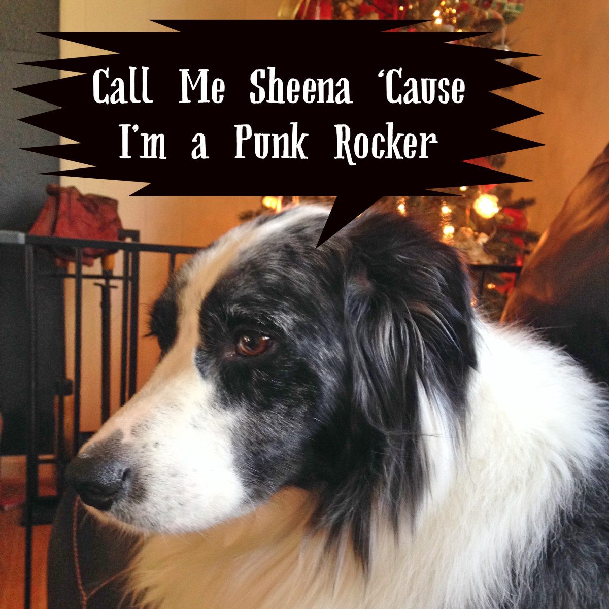 Dog names inspired by punk rock songs.
