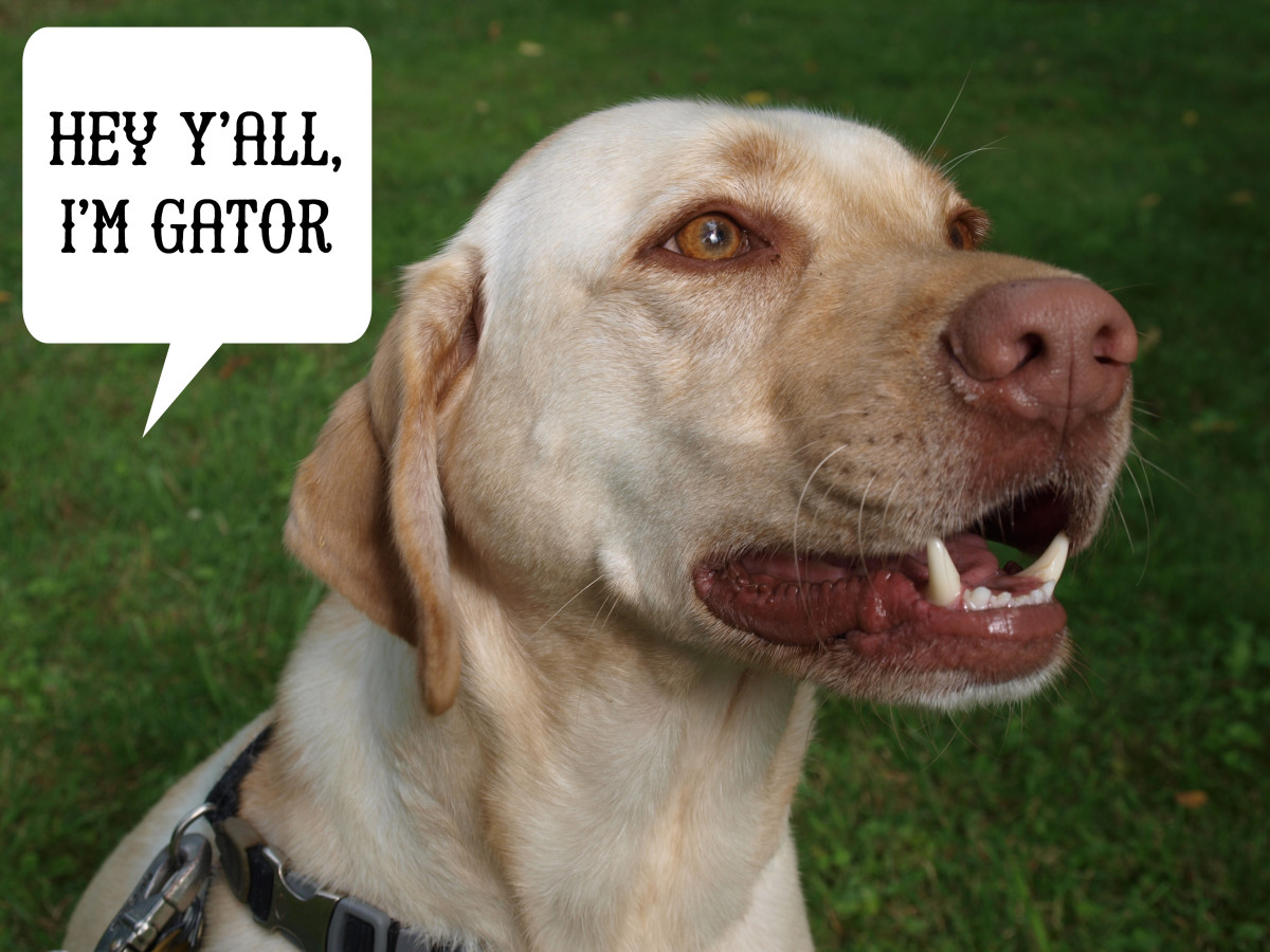 Dog names inspired by southern rock songs.
