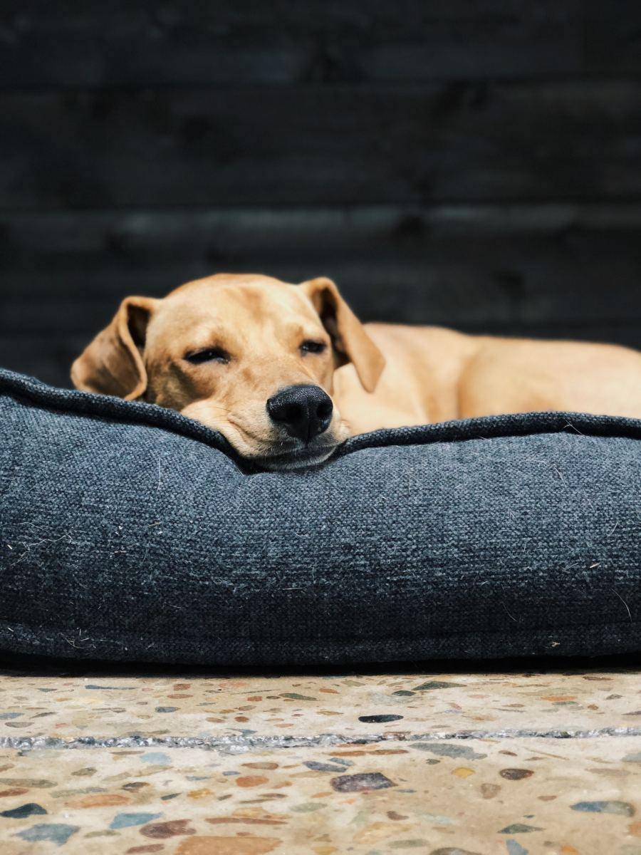 We all have lazy days, but if your dog has had too many in a row for you to ignore it's time to call your veterinarian to see what's up.