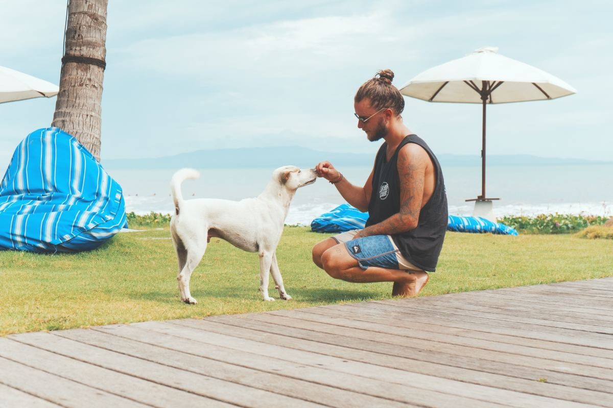If the way your dog holds herself or walks has suddenly changed, it could be a sign that the way she usually stands, sits or walks is starting to hurt.