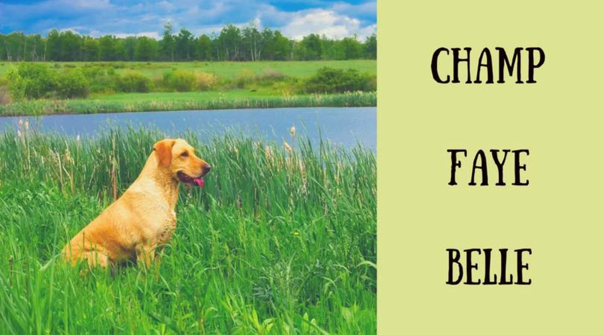 country-southern-and-western-dog-names